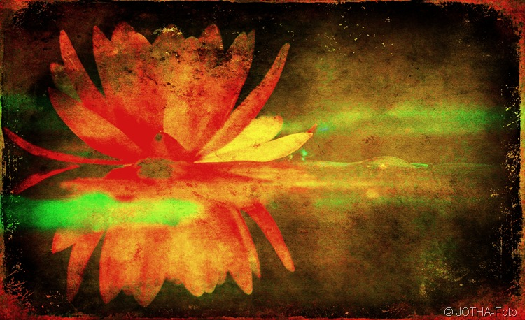 Erinnerung an eine Blüte