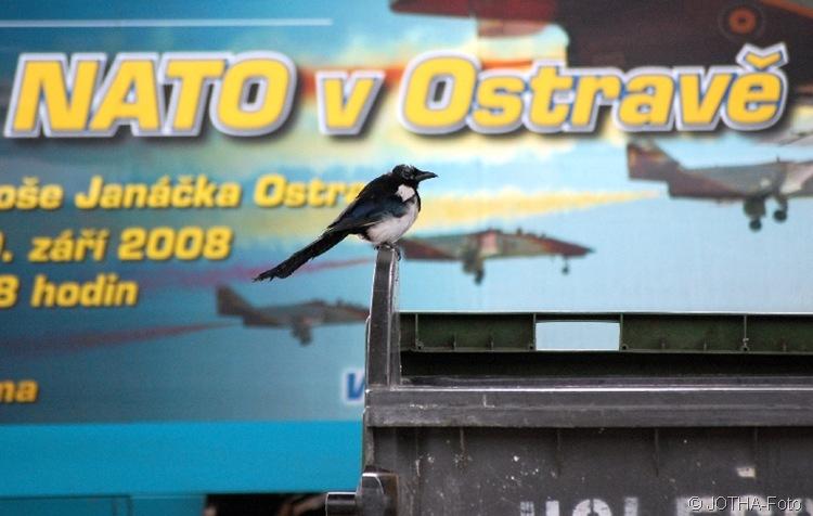 Nato- und andere Vögel