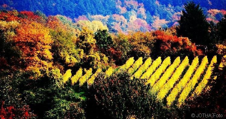 Farben des Herbstes 01
