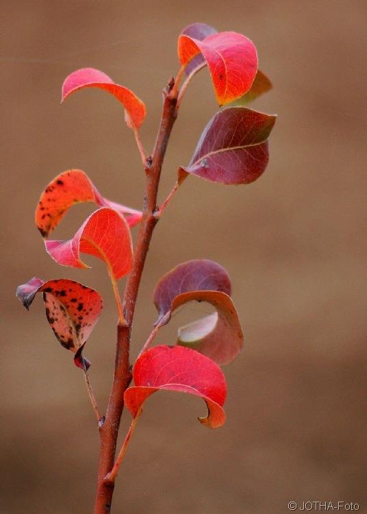 Farben des Herbstes 02