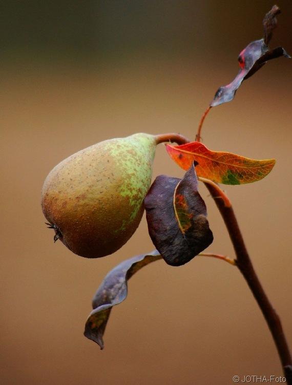 Farben des Herbstes 03