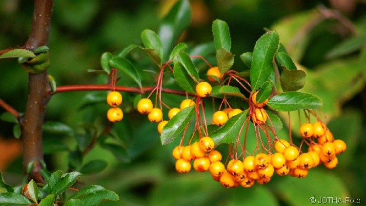 Farben des Herbstes 04