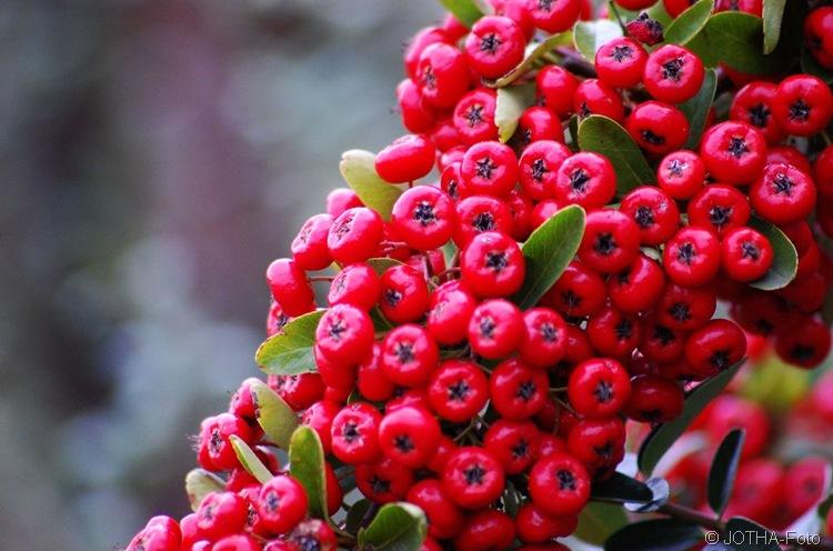Farben des Herbstes 06