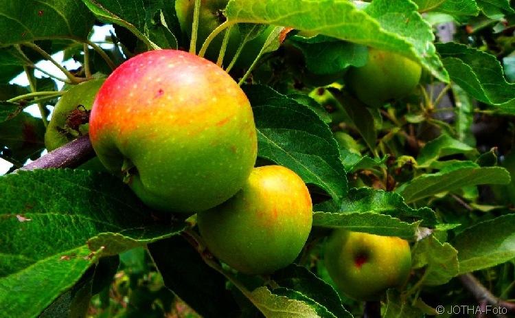 Farben des Herbstes 12
