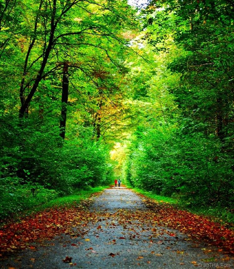 Farben des Herbstes 13