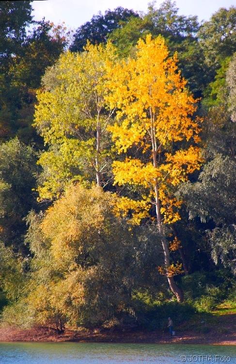 Farben des Herbstes 15