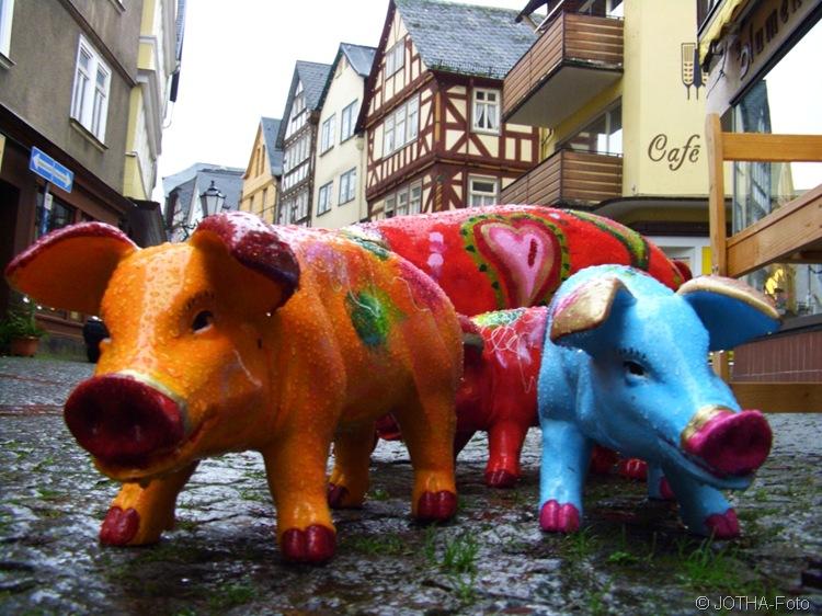 Schweine im Regen