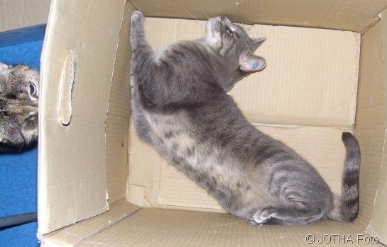 cat peepshow