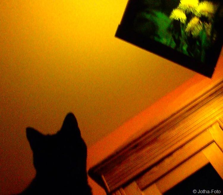 Raumänderung mit Katze