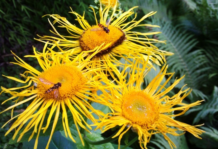 Sommer im botanischen Garten #1