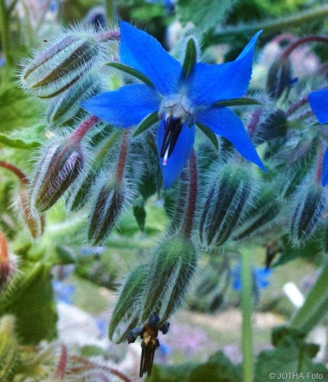 Sommer im botanischen Garten #3