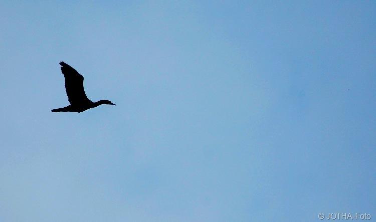 Durch die Lüfte fliegt ein Reiher...