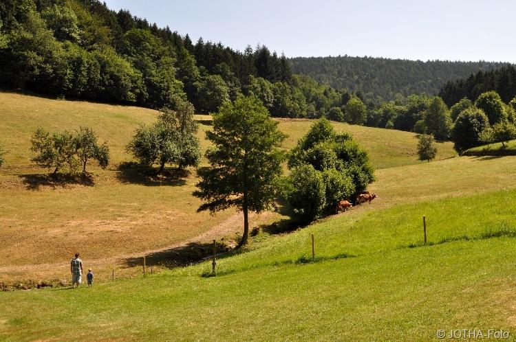 Sommertag im Odenwald