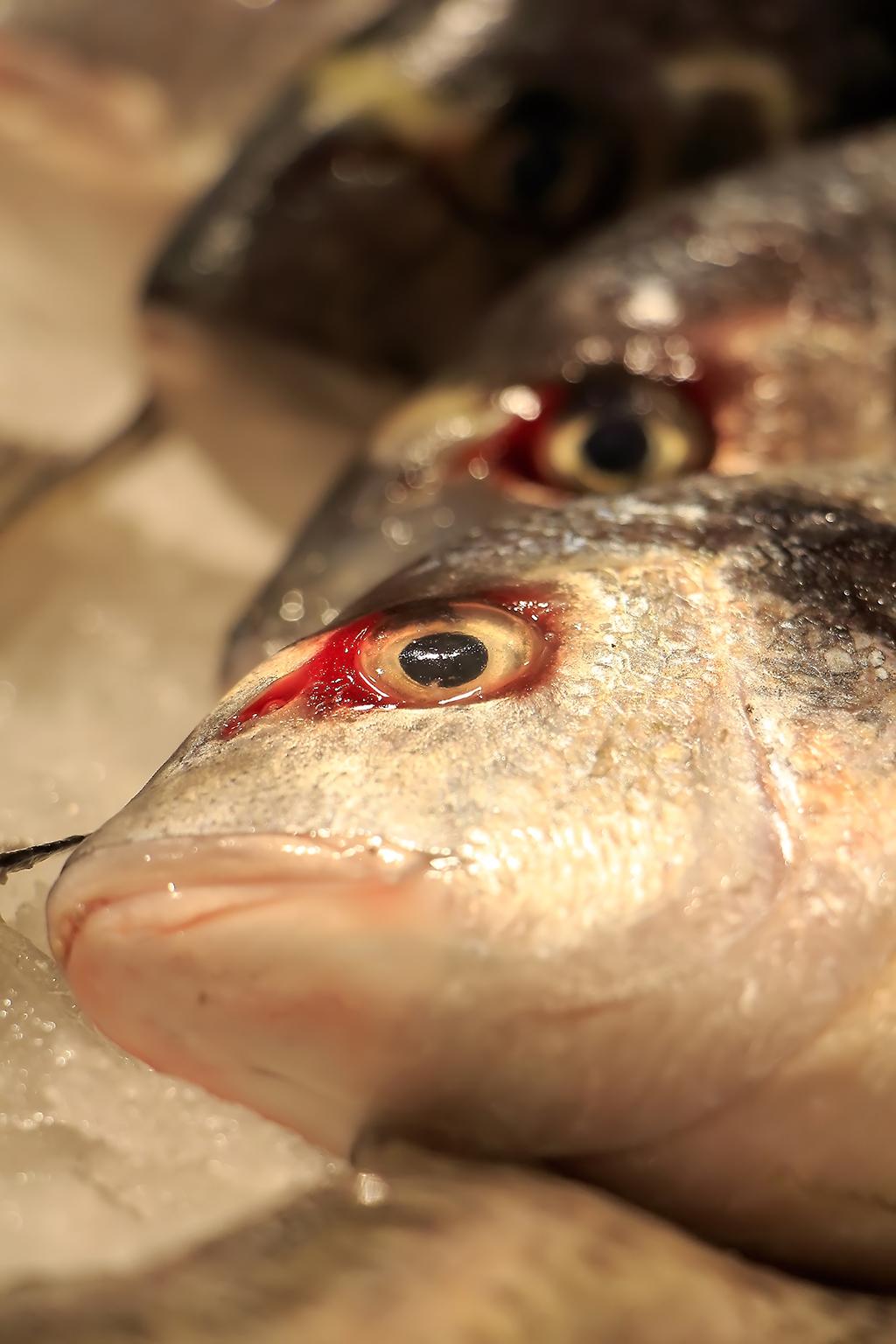 Fischauge