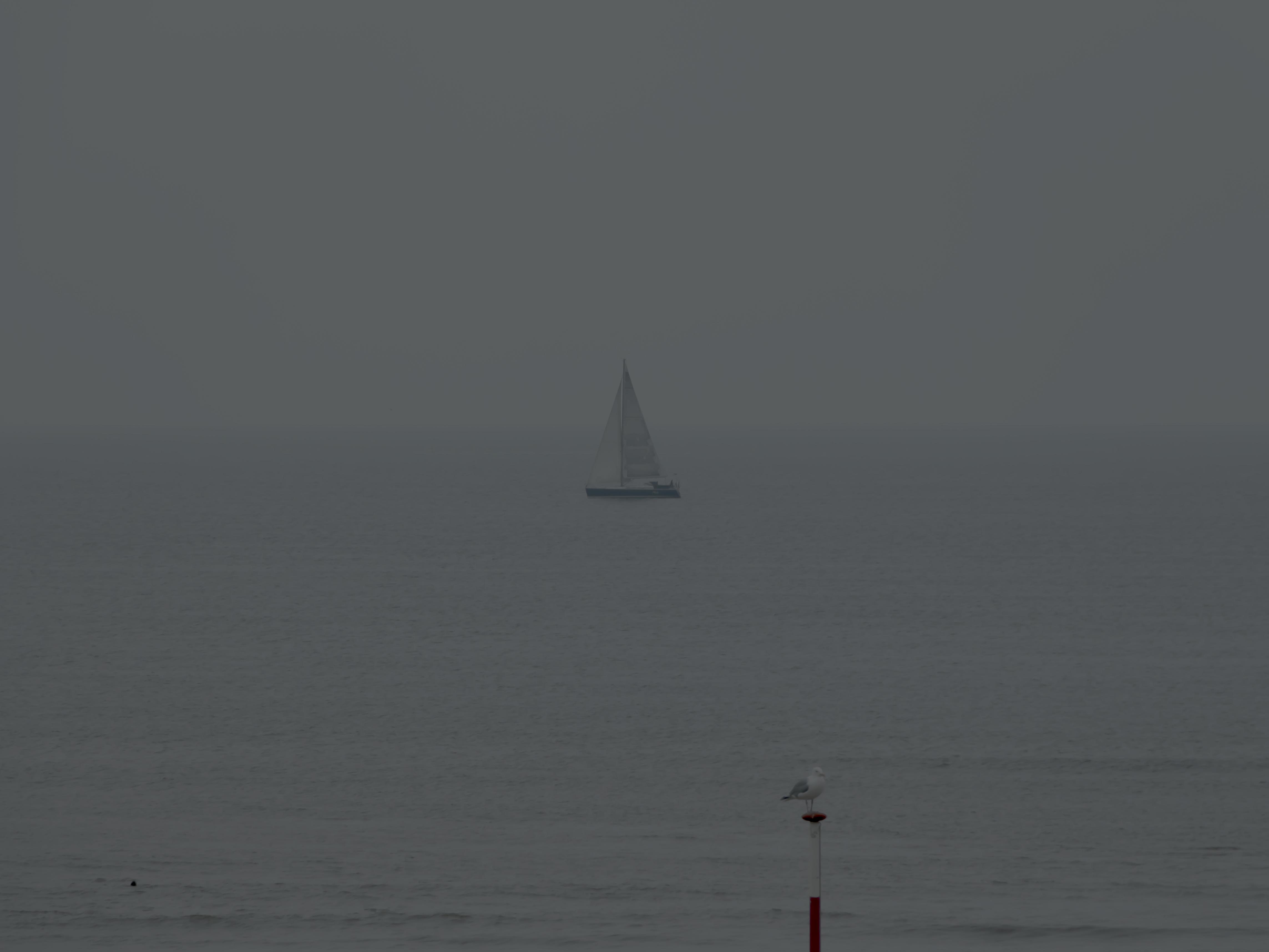 Meer und Möwe