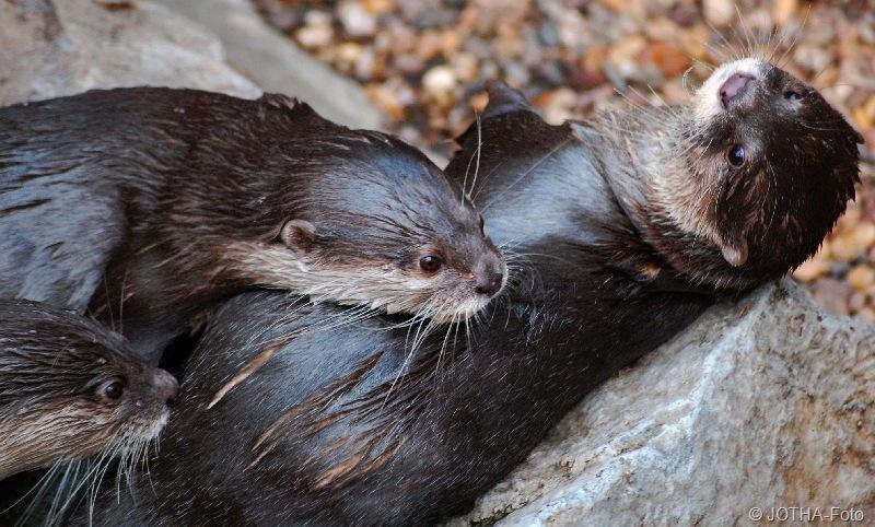 OtterSchmusen