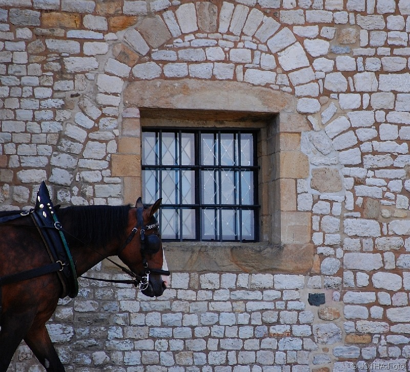 HorsePassing_thumb.jpg