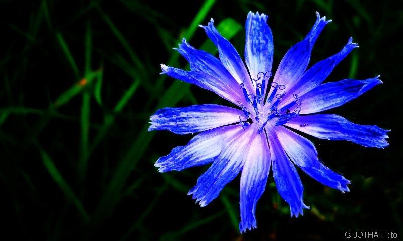 BlueStar_thumb.jpg