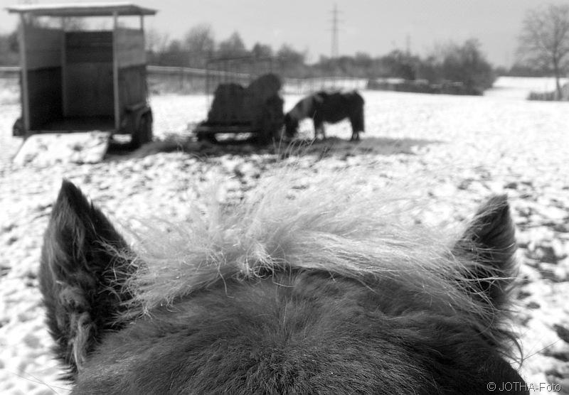 Pony_thumb.jpg