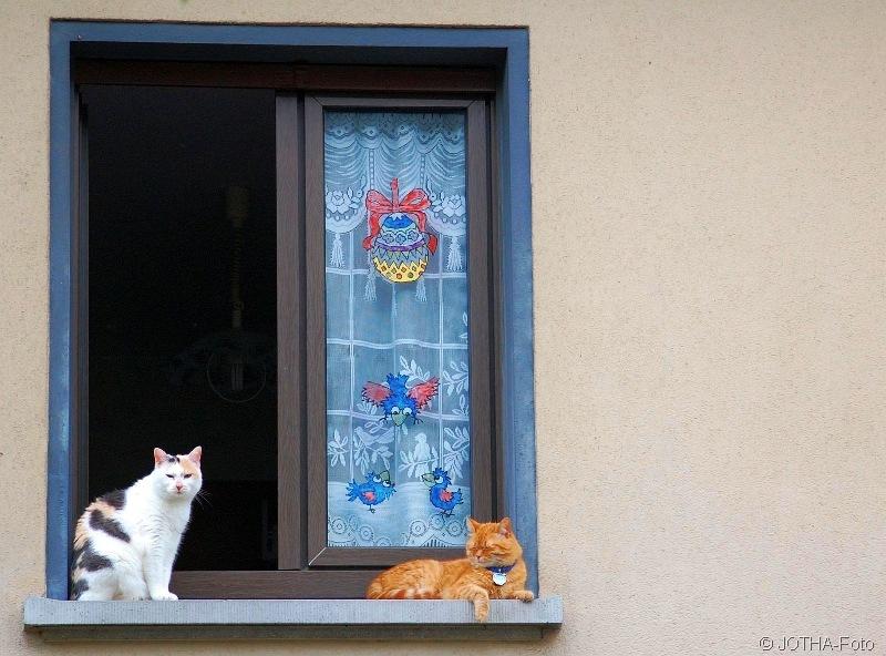 Katzenfenster_thumb.jpg