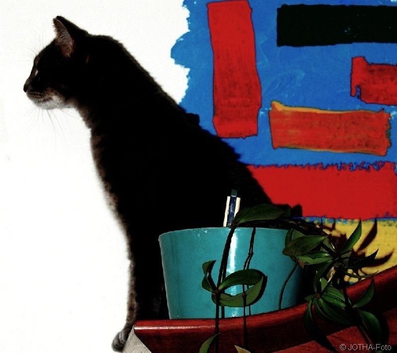 Katze_thumb.jpg