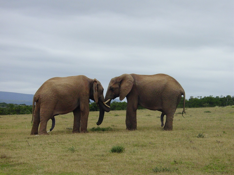 123 elephant-1046785_960_720
