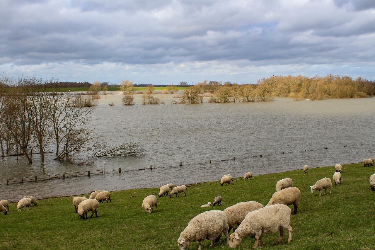 Hochwasser pixabay niederrhein-4892818_1280